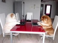 4 Tips to Avoid a Follow Up Nightmare image Two fluffy dogs on laptops. What 300x225