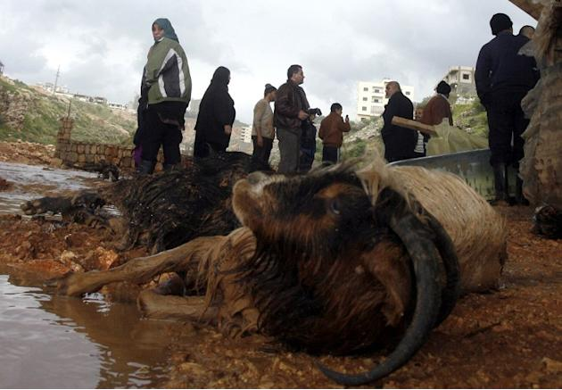 A dead goat is left after heavy rains and big wind on January 7, 2013 in the Lebanese southern city of Jadra. Heavy rains have hit the region making six people injured in Israel.  AFP PHOTO MAHMOUD ZA