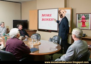 6 Reasons to Make a Dog Your CEO image Dog ceo