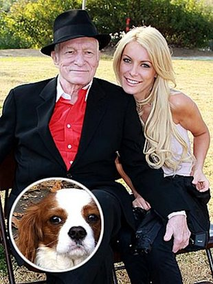 hugh hefner, crystal harris, charlie the dog