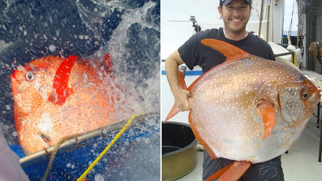 First warm blooded fish found off california yahoo news uk for Warm blooded fish