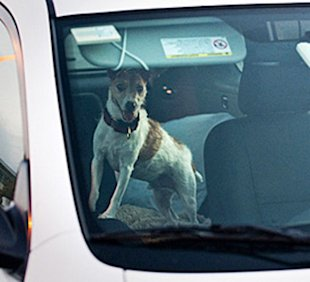 Dogs don't fare well when left in hot cars