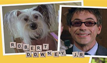 Robert Downey Jr. in Walt Disney Pictures' The Shaggy Dog
