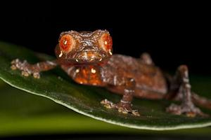 Madagascar Cools as Hotspot for New Species Evolution