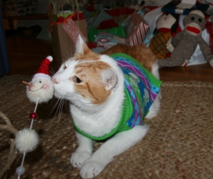 These 26 Cats Wearing Christmas Sweaters Will Put A Smile On Your Face image Cat Playing In Xmas Sweater
