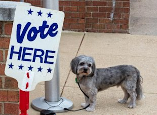 A dog is tied up outside the polling station as its owner votes on November 4, 2014 in Alexandria, Virginia, shortly after the polls opened for the midterm US elections (AFP Photo/Paul J. Richards)