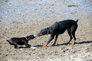SaaS Solutions vs. IT Departments in the Age of Self Service image Tug of war dogs Duncan Rawlinson Flickr CC 2.0 640x423