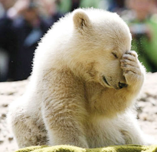 "Facepalm! 5 ""Don'ts"" for Social Selling image facepalm bear 2"