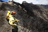 Firefighters stand amongst burnt trees after a wildfire swept through the Garajonay national park on the island of La Gomera. Firefighters made strides Tuesday against wildfires on Spain's Canary Islands, but the country was on alert for more blazes due to an impending heatwave