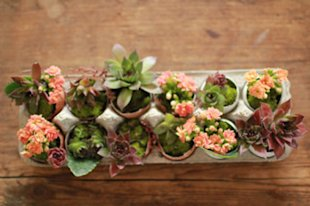 Egg Carton Planter