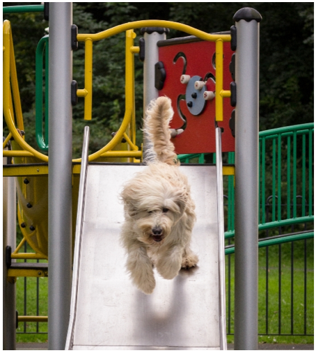 Dog Running Down the Slide
