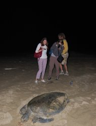 Turtle conservation: Sukamade is famous as place for turtle conservation. (