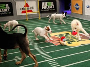 courtesy of Puppy Bowl