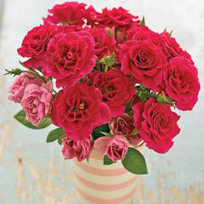 Valentine's Day Flowers