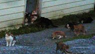 A frame from a YouTube video shows cats near a bungalow in Corner Brook.