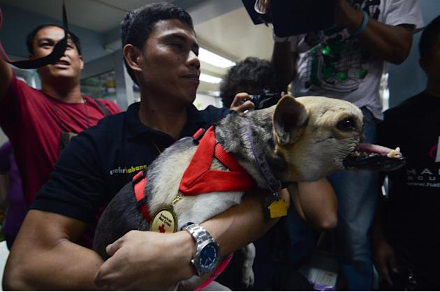 Hero Dog Kebang Returns Home After Surgery