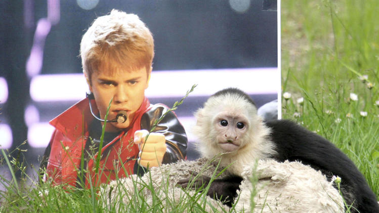 Justin Bieber's Capuchin Monkey Mally at Serengeti Park Zoo in Germany