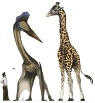 Pterosaurs ranged in size from Quetzalcoatlus, which was as tall as a giraffe, to Anurognathus, an insect-eater the size of a small bird seen to the left of Quetzalcoatlus.
