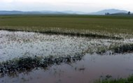This file photo shows a flooded field after torrential rains hit North Korea's Sukchon county in 2010. North Korea warned on Sunday that more rainstorms will hit the country's north and western coastal regions this week, after recent flooding killed 88 people and left tens of thousands homeless
