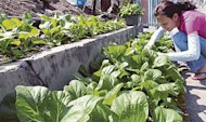 Growing own food to save money
