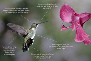 How Google Hummingbird Changed the Future of Search image google hummingbird fact diagram 600x407