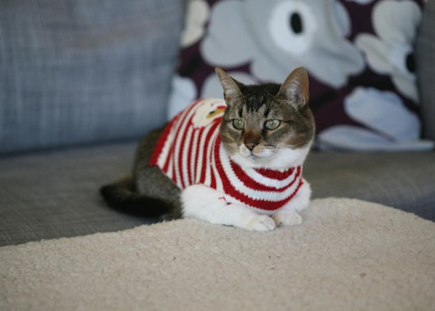 These 26 Cats Wearing Christmas Sweaters Will Put A Smile On Your Face image Cat In XMas Sweater 839x600