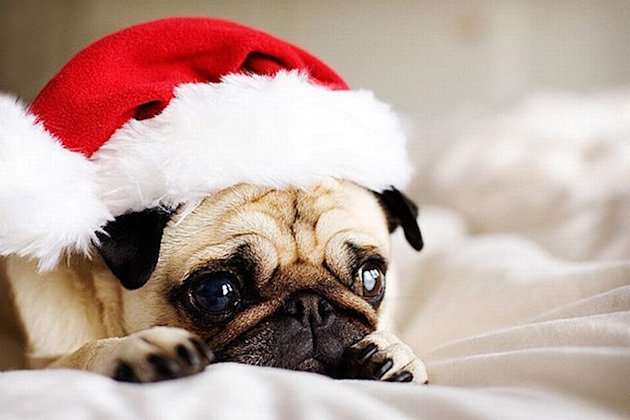 10 Animals Who Refuse To Get Into The Christmas Spirit image Funny Christmas animals18.jpg