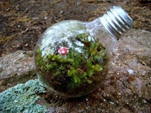 Lightbulb Greenhouse