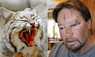 Bobcat Mauls Two In US Garage Attack