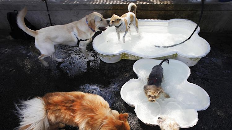 Dogs splash in canine wading pools in Hudson River Park during a heat wave, Tuesday, July 16, 2013 in New York. Forecasts are predicting temperatures in the 90s through Saturday. (AP Photo/Mark Lennihan) (AP Photo/Mark Lennihan)