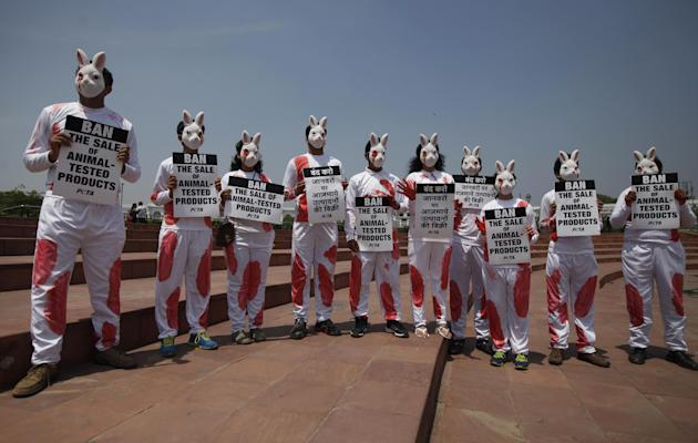 India activists from People for the Ethical Treatment of Animals (PETA) dressed as rabbits hold placards during a protest in New Delhi, India, Friday, April 18, 2014. The protest was held ahead of the