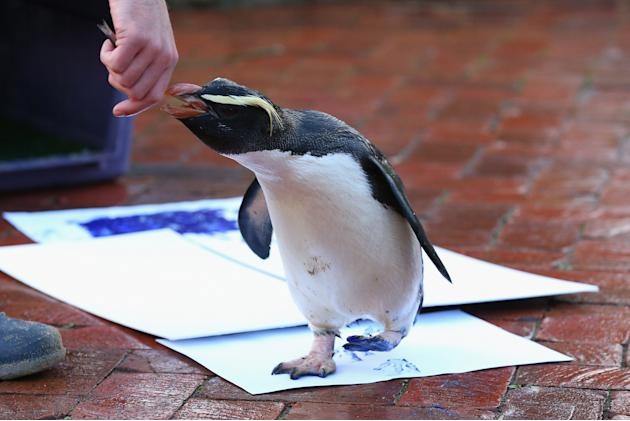 ***BESTPIX*** Taronga Zoo Animals Paint Canvas With Footprints