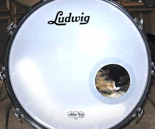 Master Spy Cats Reveal The Secrets To Feline Stealth! image cat sleeping in drum.jpg