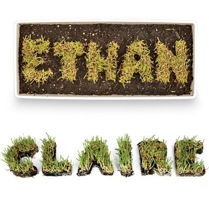 Grow Your Own Name