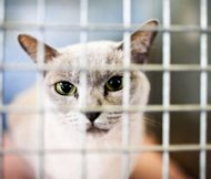 cats in shelters
