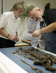 This shows research leader Jens Vellev, Aarhus University examining the remains of Tycho Brahe in 2010.