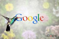 How Hummingbird's Long Tail Is Changing Search For The Better image google hummingbird algorithm update
