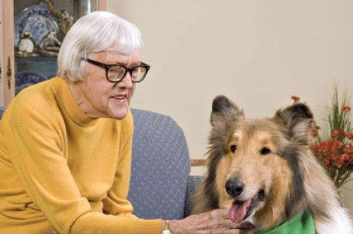 Have your Pet Participate in Therapeutic Visitation