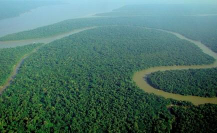 Parts of the Amazon