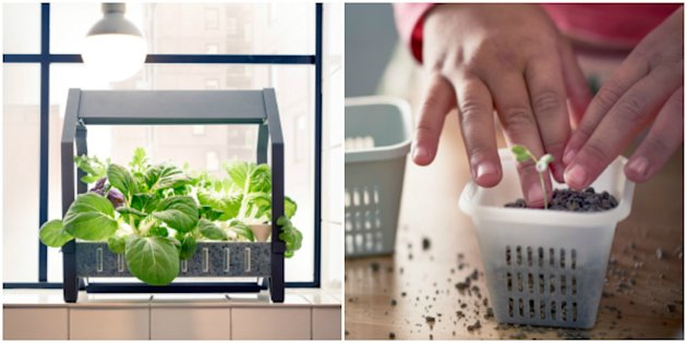 Ikea is now selling a fool proof indoor gardening kit for Indoor gardening meaning