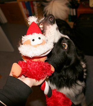 10 Animals Who Refuse To Get Into The Christmas Spirit image nom nom nom.jpg