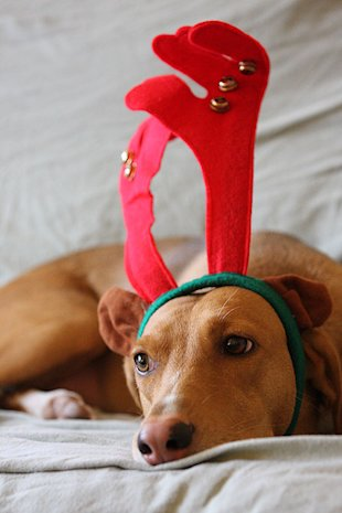 10 Animals Who Refuse To Get Into The Christmas Spirit image i get it.jpg