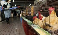 Bird Flu Outbreak Costs China £100m Each Day