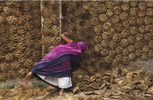 A woman pastes cow dung cakes on a wall for drying in Allahabad