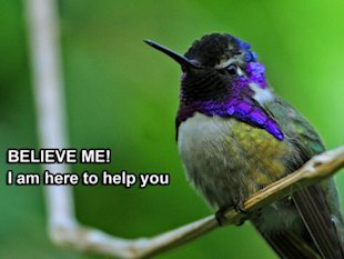 How Google Hummingbird Can (And Should) Impact Your Content Marketing Strategy image hummingbird 2