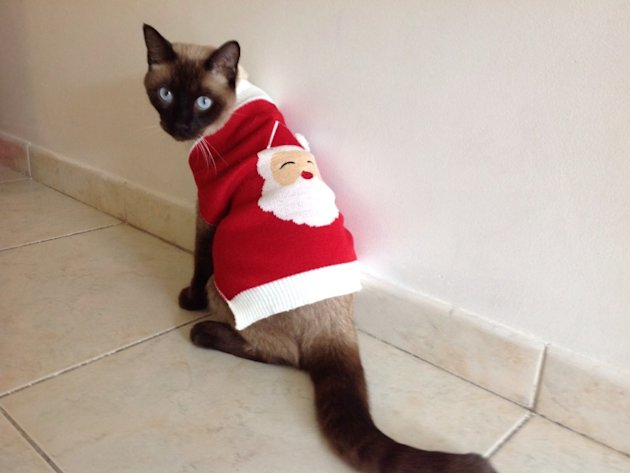 These 26 Cats Wearing Christmas Sweaters Will Put A Smile On Your Face image Christmas Cat Sweater 800x600