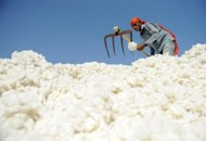India ended recent restrictions on cotton exports, six weeks after partially reversing a ban it had imposed on overseas sales