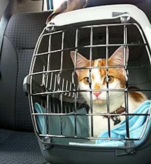Cats can be fickle travelers