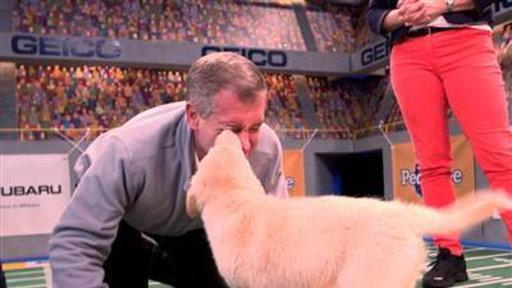 Brian Williams Previews the Puppy Bowl
