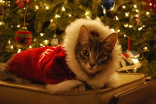 These 26 Cats Wearing Christmas Sweaters Will Put A Smile On Your Face image Cat In Santa Claus Sweater